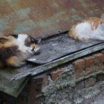 Бездомные кошки 134