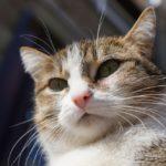 Бездомные кошки 137