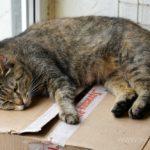 Бездомные кошки 138