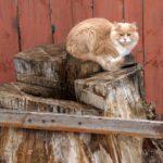 Бездомные кошки 139