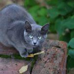 Бездомные кошки 140