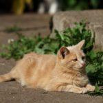 Бездомные кошки 141