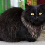 Бездомные кошки 142