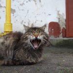 Бездомные кошки 143