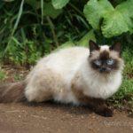 Бездомные кошки 144