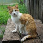Бездомные кошки 145