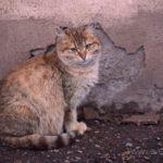 Бездомные кошки 148