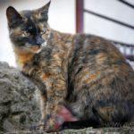 Бездомные кошки 151