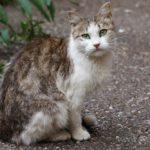 Бездомные кошки 152