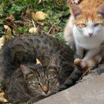 Бездомные кошки 153