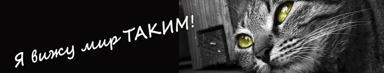 Светлана Комкова, член Союза журналистов и фотохудожников России, почетный член Объединения фотографов Азербайджана