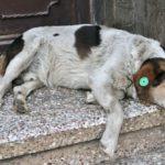 dog-tbilissi04