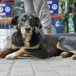 dog-tbilissi09