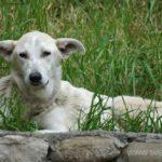 dog-tbilissi11